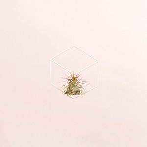 Ionantha + forma geometrica