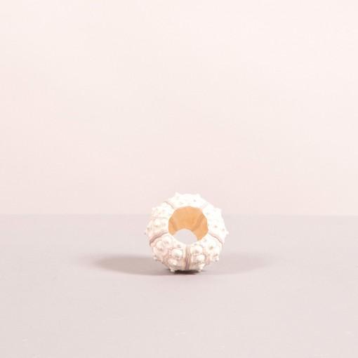 Riccio bianco