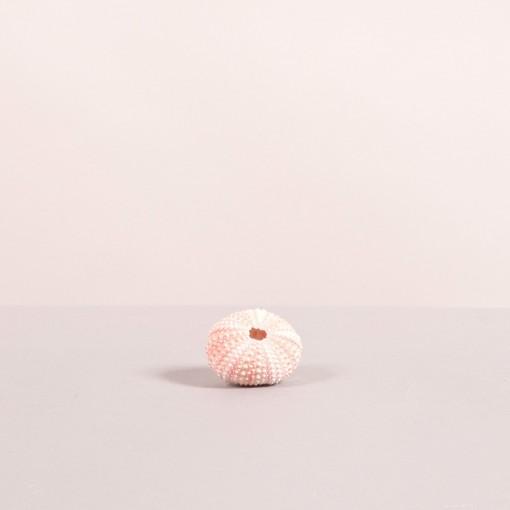 Riccio rosa