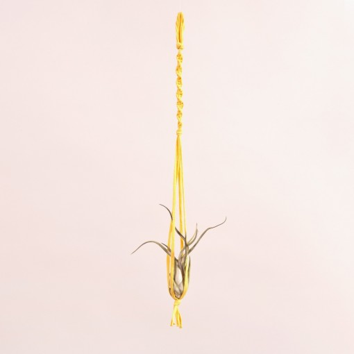 Caput medusae + macramè giallo